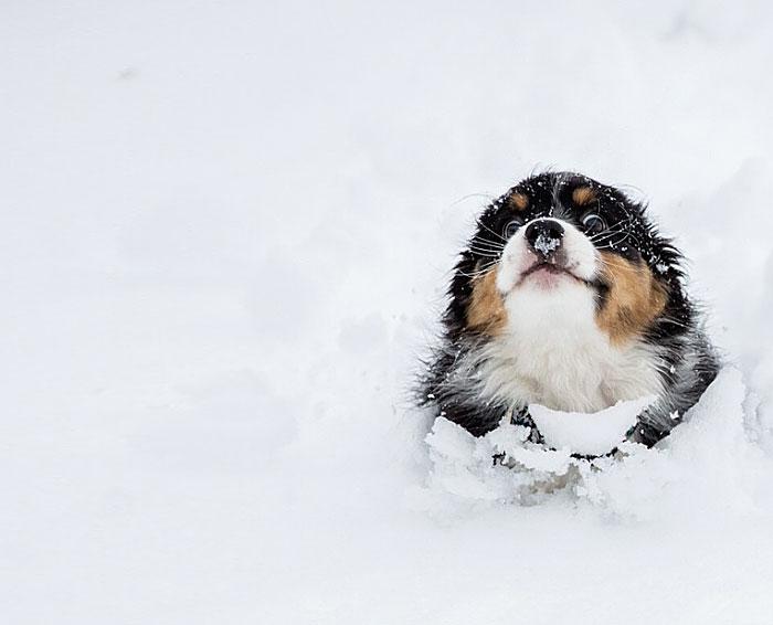 Puppy Running Through The Snow