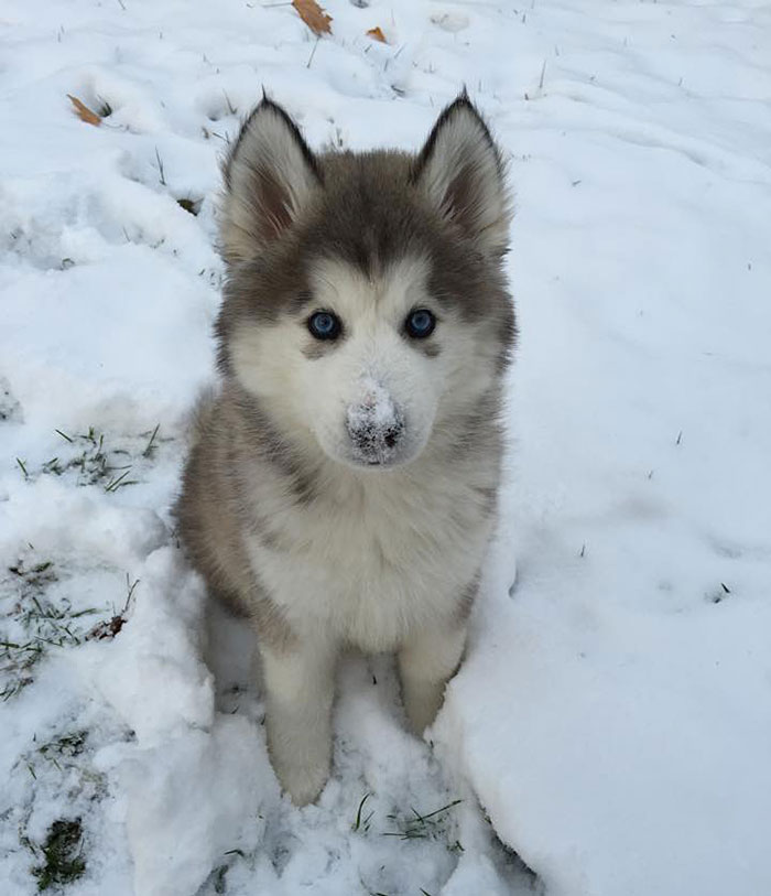 My Sister And Her Husband Recently Adopted, This Is His First Snow