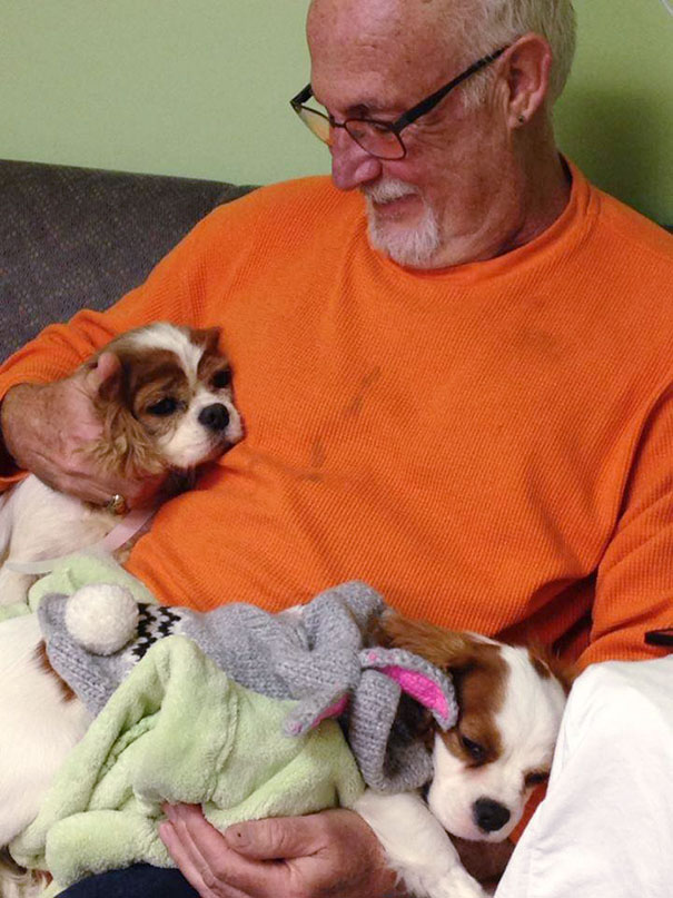 cavalier-king-charles-cocker-spaniel-rescue-puppy-mill-auction-11