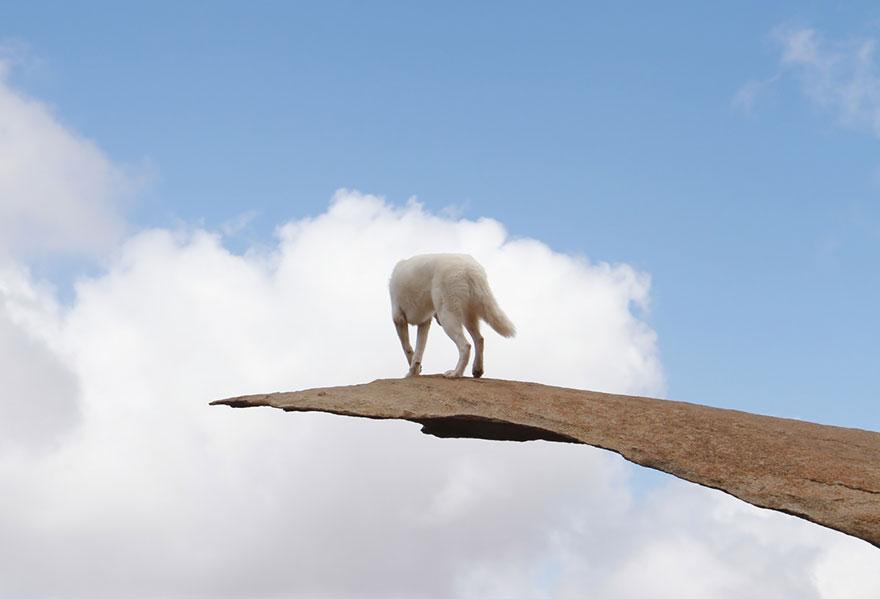 dog-adventures-john-stortz-14
