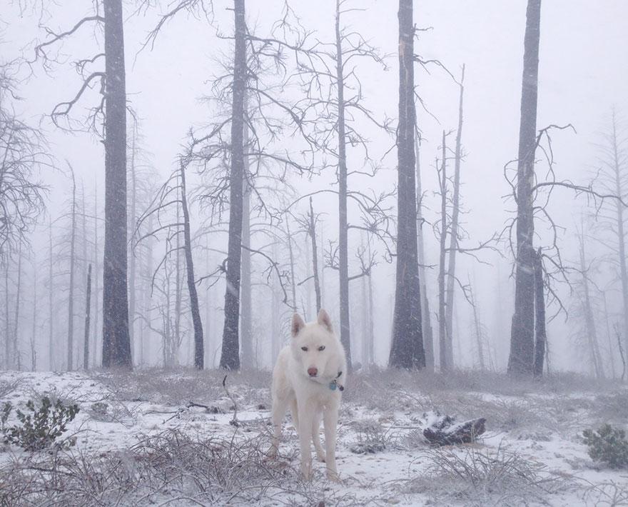 dog-adventures-john-stortz-18