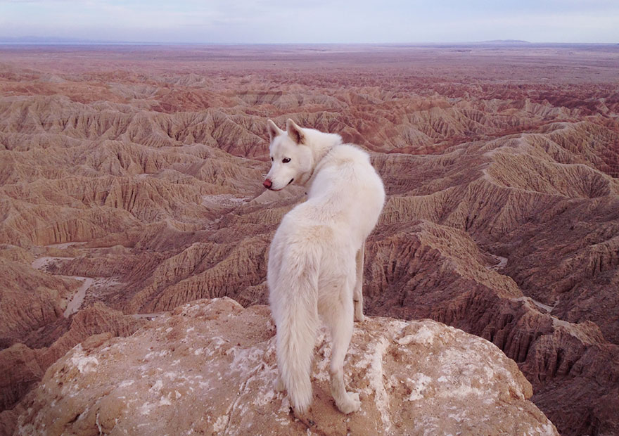 dog-adventures-john-stortz-19