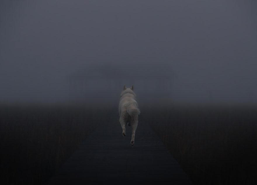 dog-adventures-john-stortz-20
