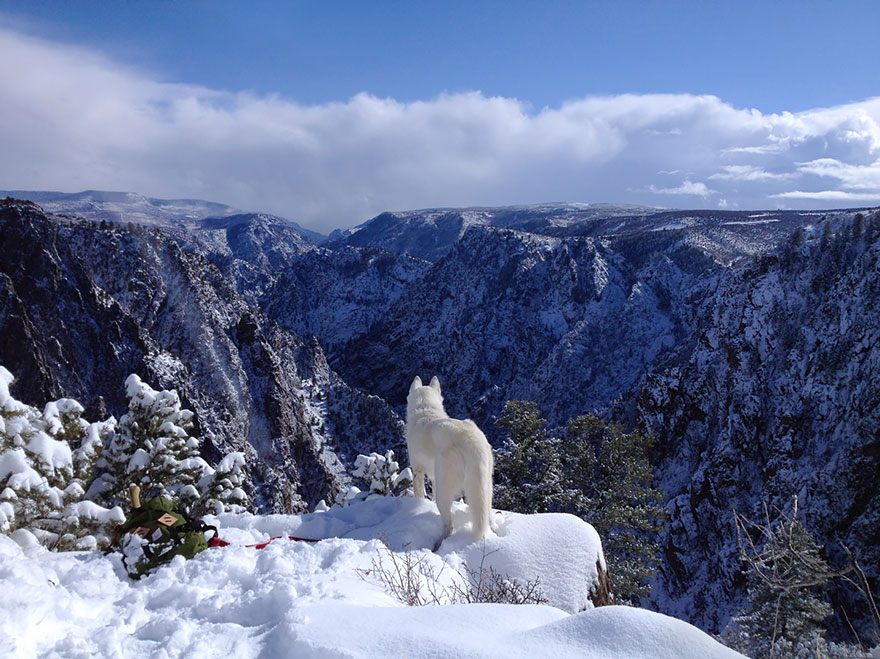 dog-adventures-john-stortz-23