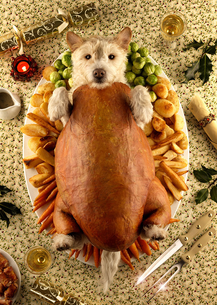 dog-transformed-to-other-animals-holiday-card-8