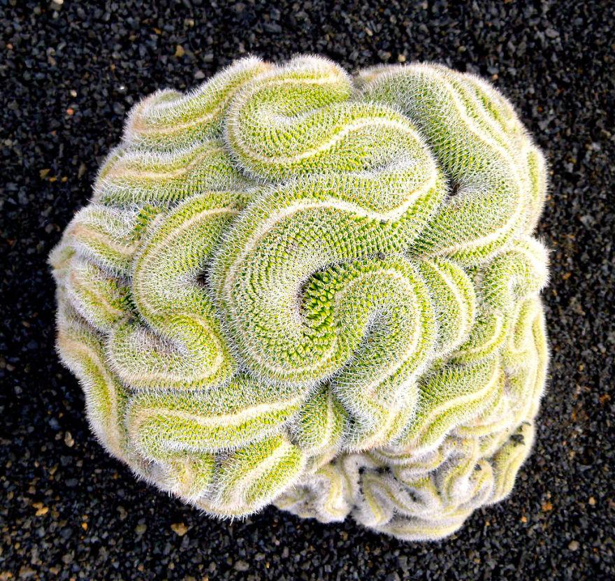Thinking Cactus