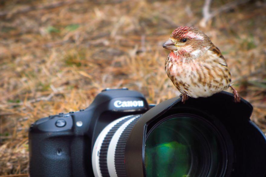 Mr. Photography Bird