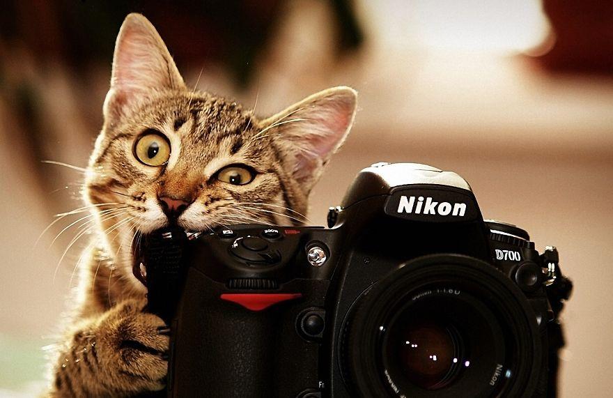 Cat With Nikon Camera