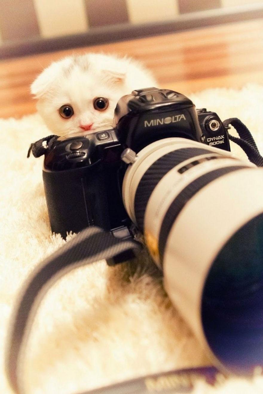 Furry Photographer