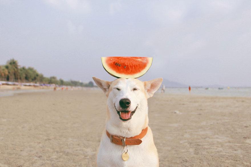 happy-dog-photography-gluta-thailand-13
