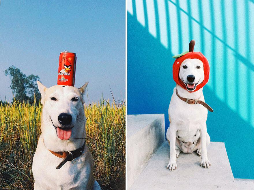 happy-dog-photography-gluta-thailand-5