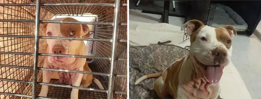 mascotas-adoptadas-antes-despues (12)