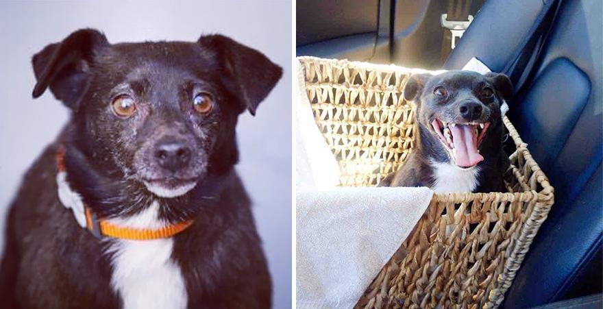 mascotas-adoptadas-antes-despues (13)