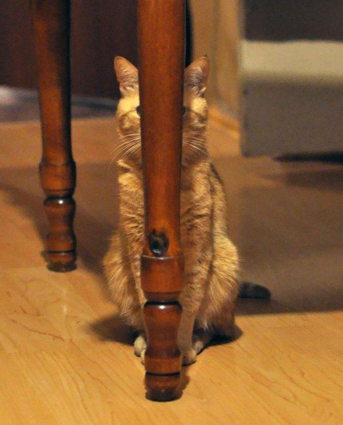 ninja cat hiding funny 108  605 - 20+ Ninja Cats That Have Mastered The Ancient Art Of Ninjutsu
