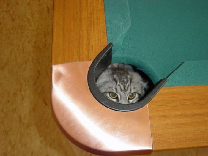 ninja cat hiding funny 17  605 - 20+ Ninja Cats That Have Mastered The Ancient Art Of Ninjutsu