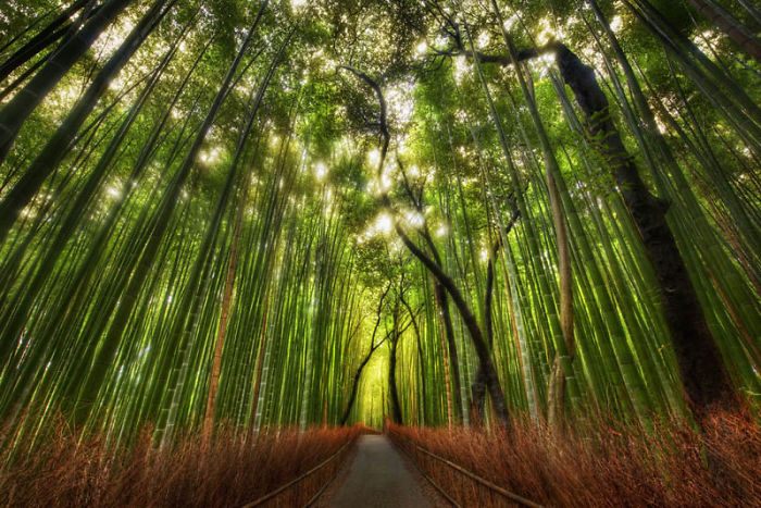 Bamboo Forest, Sagano, Japan