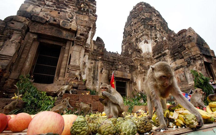 Monkey Buffet Festival (Thailand)