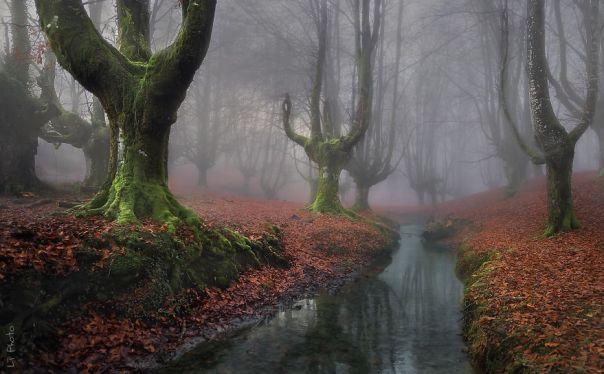 OTZARRETA Bosque, País Vasco, España