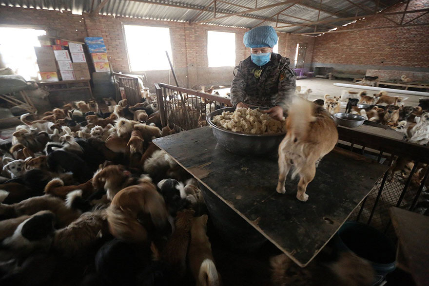 china-1300-stray-dog-shelter-wang-yanfang-1