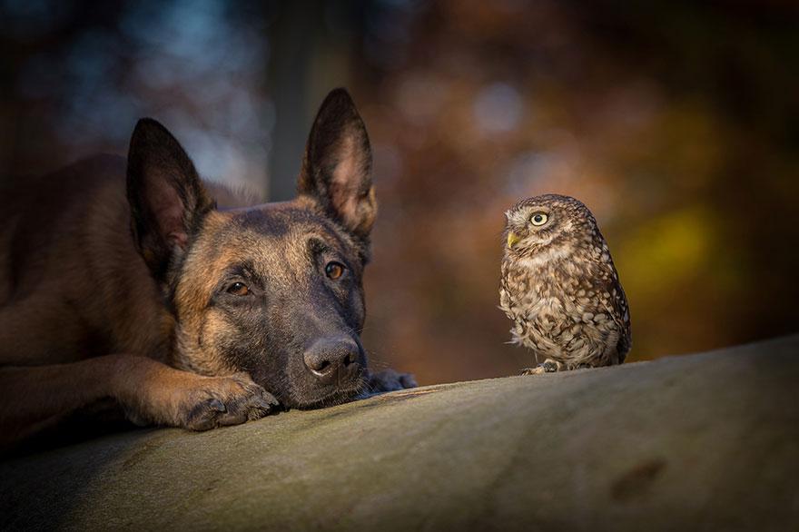 ingo-else-dog-owl-friendship-tanja-brandt-6