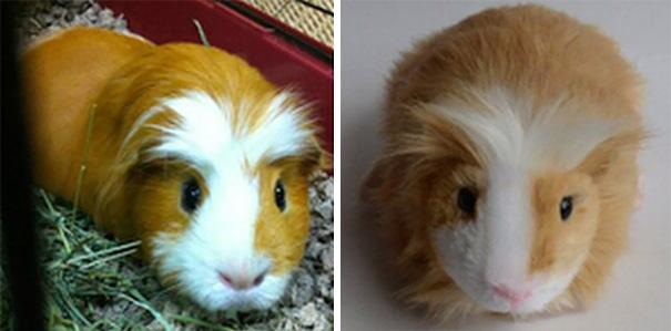 pet-copy-custom-plush-toys-cuddle-clones-15