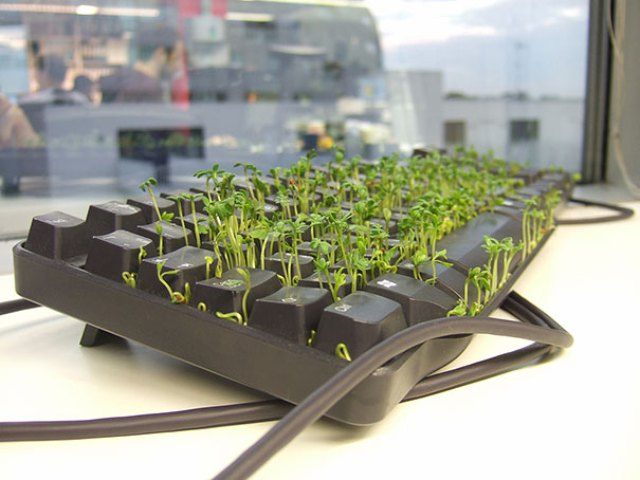Plant A Grass Garden In Your Coworker's Keyboard