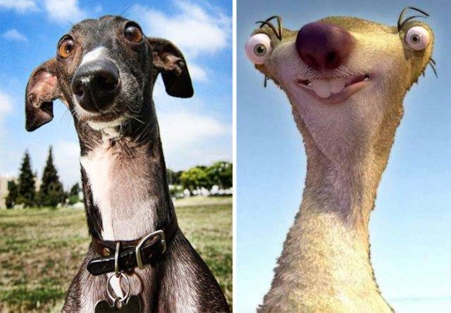 Greyhound Looks Like Sid