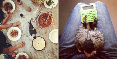 penguin-magpie-rescue-friendship-bloom-family-australia-29