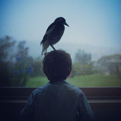 penguin-magpie-rescue-friendship-bloom-family-australia-30