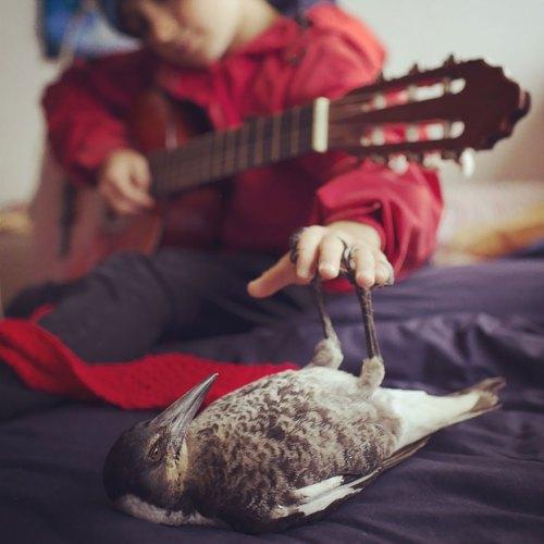 penguin-magpie-rescue-friendship-bloom-family-australia-5