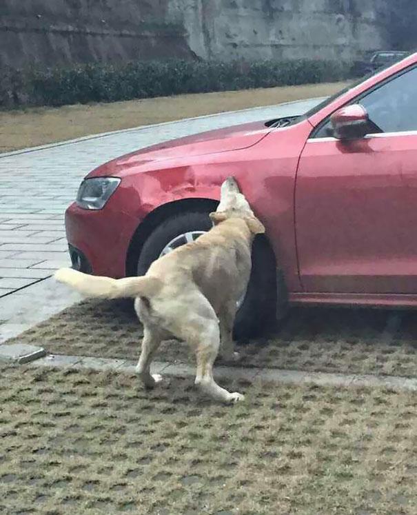 venganza-perro-callejero (4)