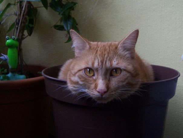 50個不需要你澆一滴水就可以長得茂盛的新奇「貓咪盆栽」!