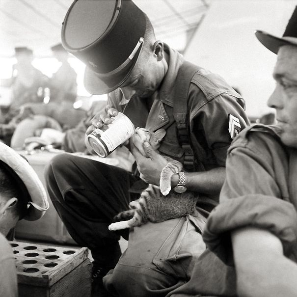 A French Soldier Feeding His Kitten During The Vietnam War