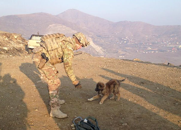 This Little Guy Kept Us Company On A Mountaintop North Of Kabul, Afghanistan