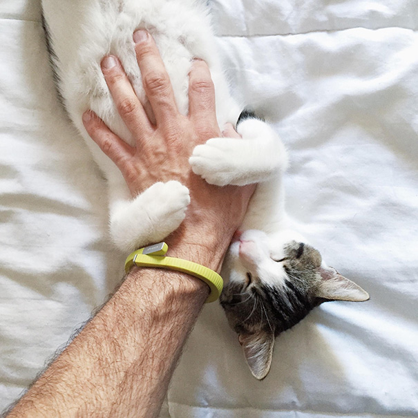 One More Belly Rub May Result In A Hand Attack, But For Now, Simon Is Giving Out Hugs And Kisses