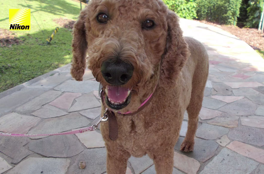 dog-takes-photos-heart-rate-monitor-phodographer-heartography-nikon-8