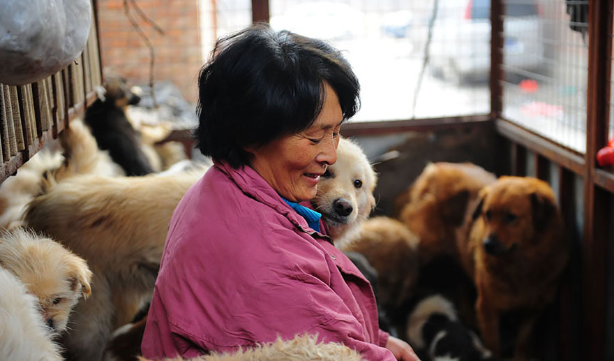 rescued-dogs-yulin-dog-meat-festival-china-17
