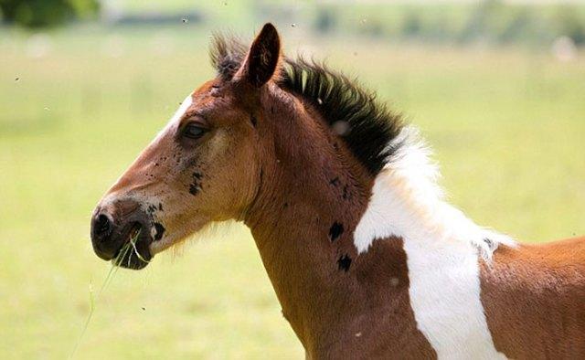 da-vinci-horse-pattern-north-yorkshire-4