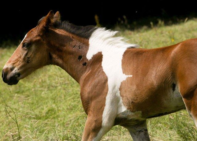 da-vinci-horse-pattern-north-yorkshire-8