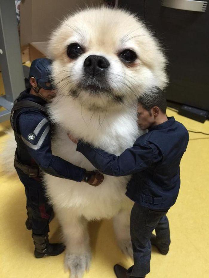 Giant Dog Or Tiny Men