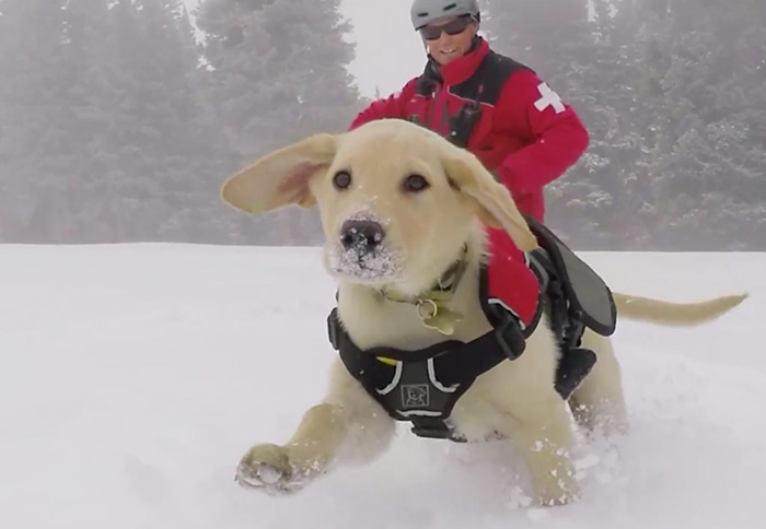 Giant Puppy Playing In The Snow