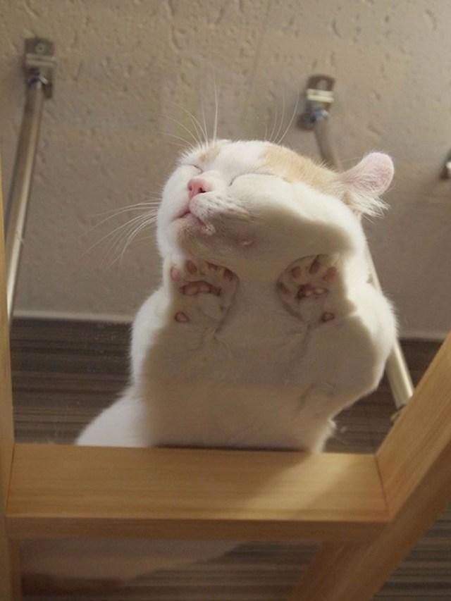 Kitty Sleeping On A Glass Table