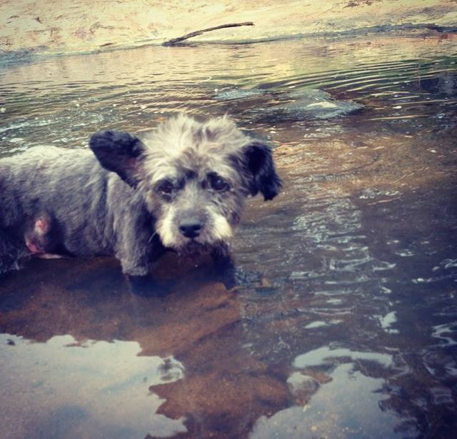 woman-adopts-abandoned-dying-dog-chester-nicole-elliott-8