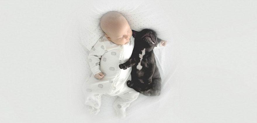 baby-dog-friendship-french-bulldog-ivette-ivens-24