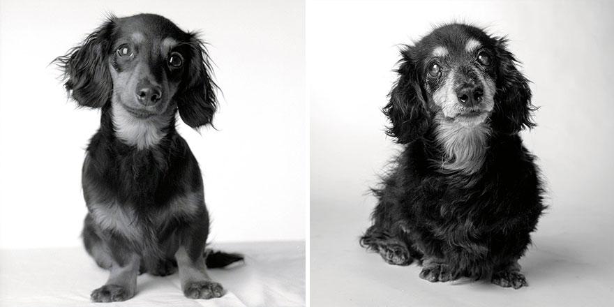 young-dog-old-years-book-amanda-jones-6