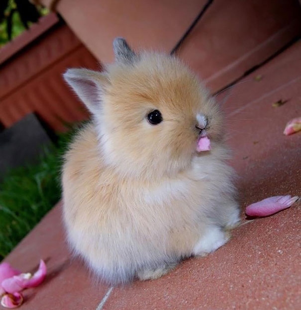 20 Of The Cutest Bunnies Ever Bored Panda
