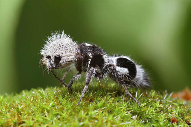 How To Control Velvety Tree Ants