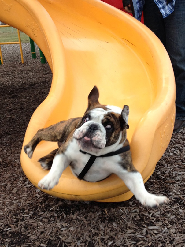 Shakespeare's First Trip Down A Slide