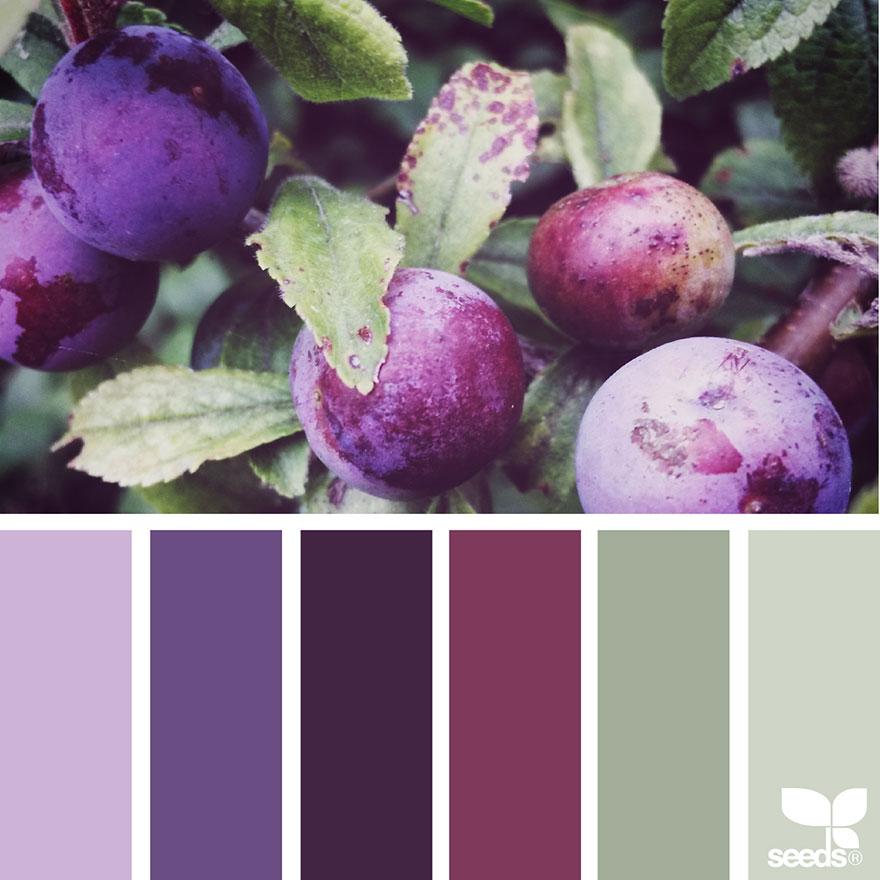 Nature Inspired Color Palettes AKA Design Seeds For