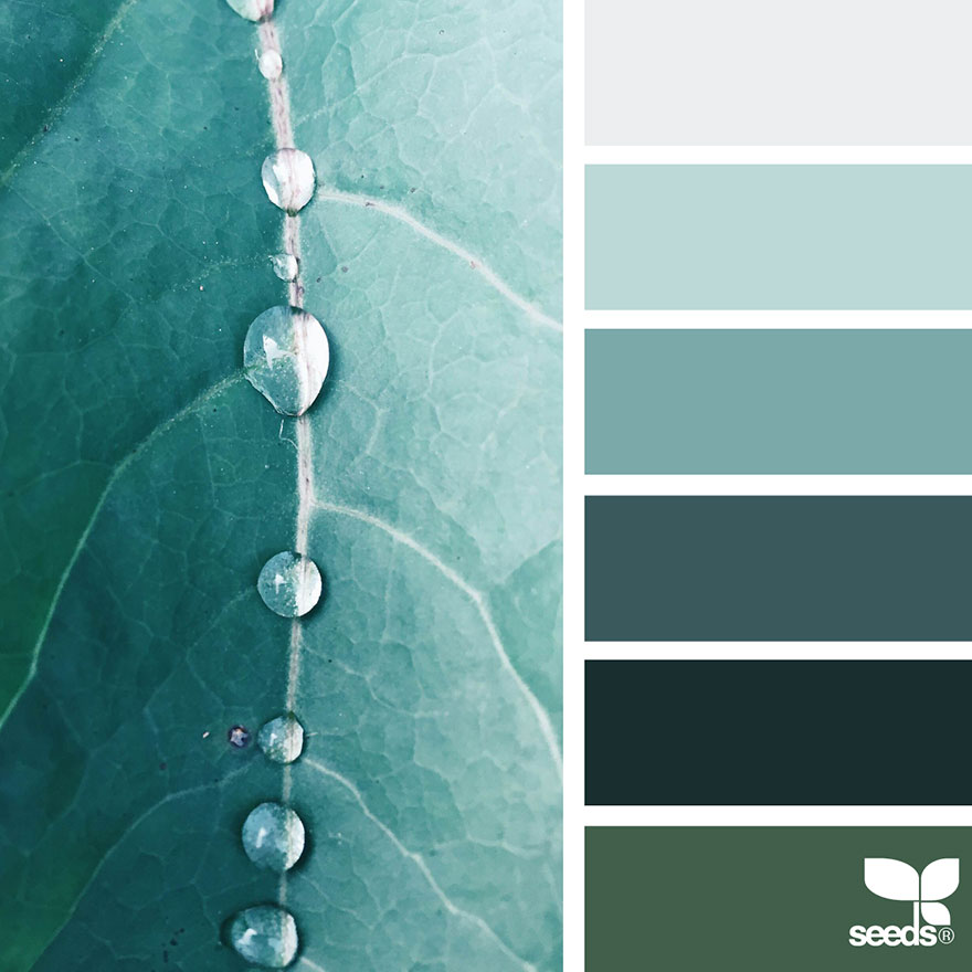 Nature Inspired Color Palettes AKA Design Seeds For